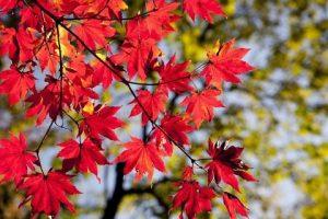 Selbstverteidigung im Herbst